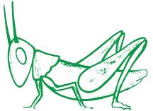 grasshopper-white